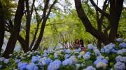 河口湖 八木崎公園
